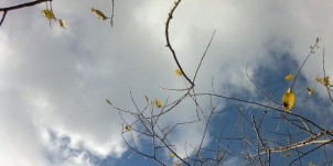 cropped-new-autumn-1-sigfridsson-171.jpg